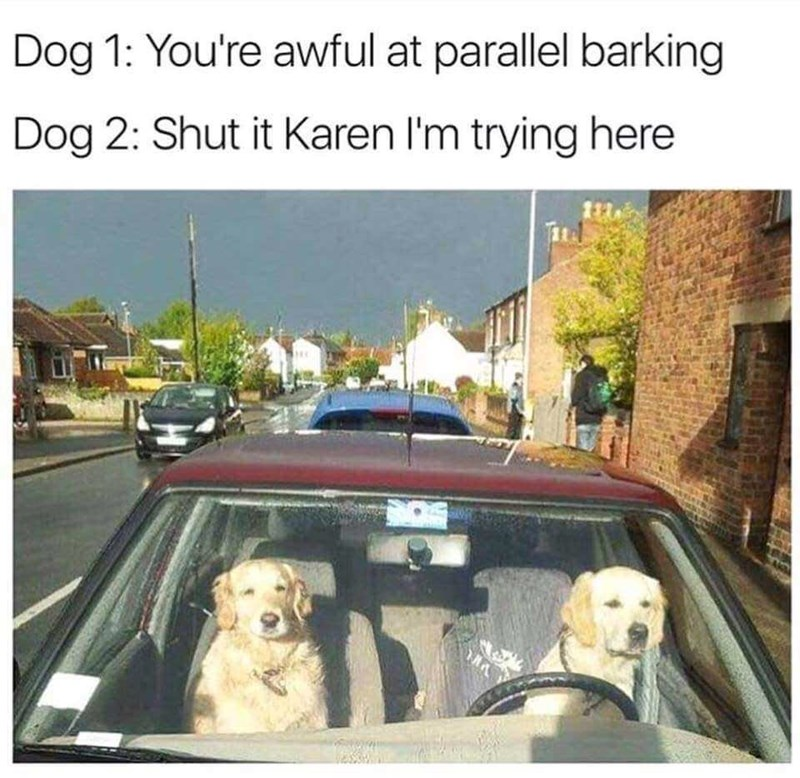 dogs driving meme