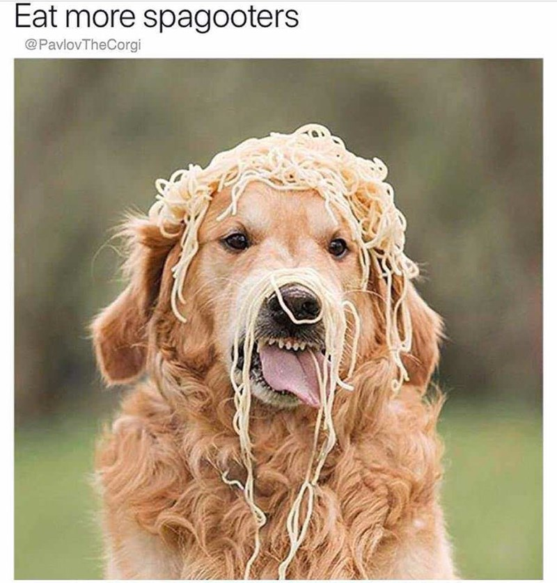 wholesome meme of a dog covered in spaghetti