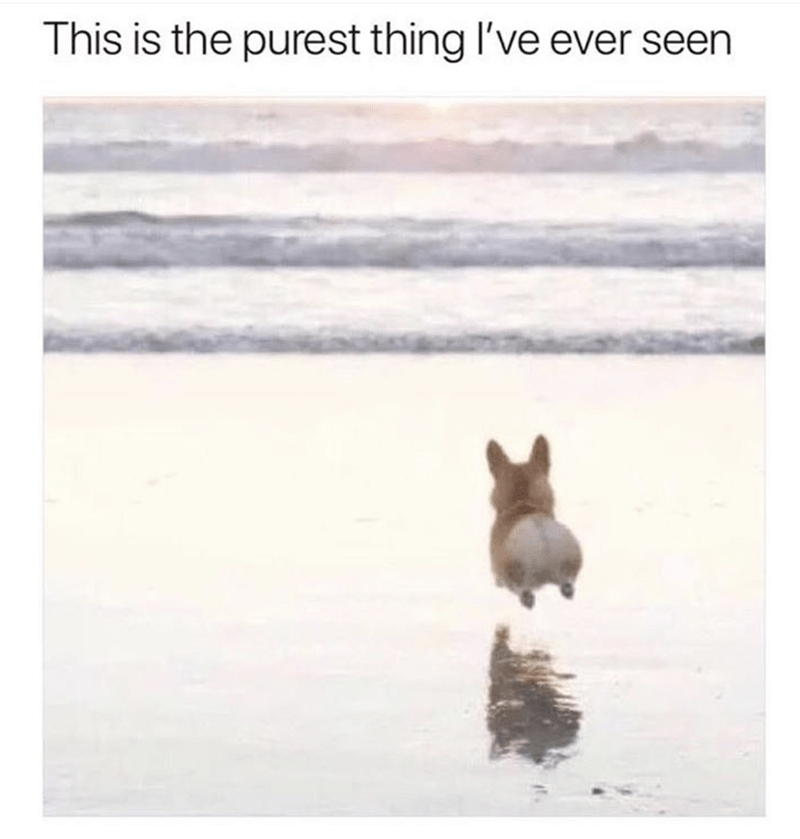 wholesome meme of a dog running towards the ocean