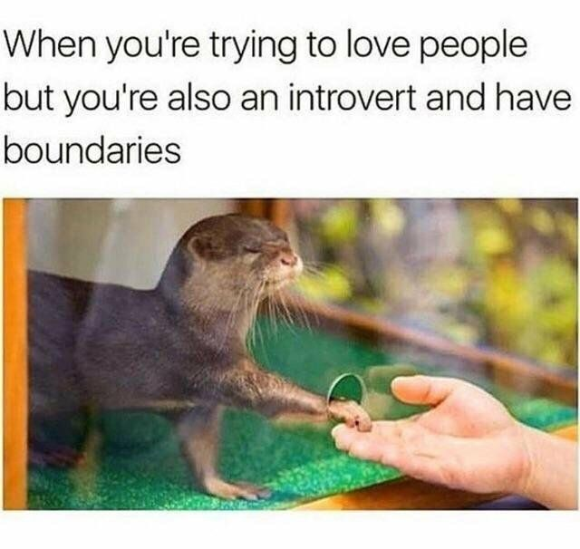 wholesome meme about being an introvert and not knowing how to get close to people