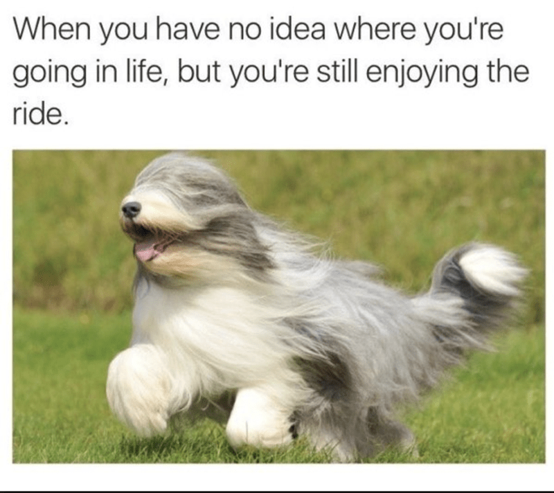 wholesome meme of a dog running through the wind even though his fur is covering his eyes