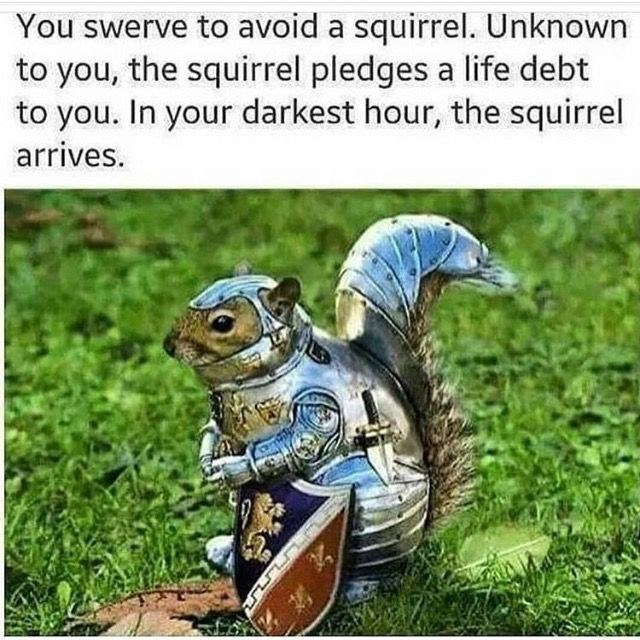 wholesome meme of a squirrel that is in debt to you because you did'nt hit it with your car