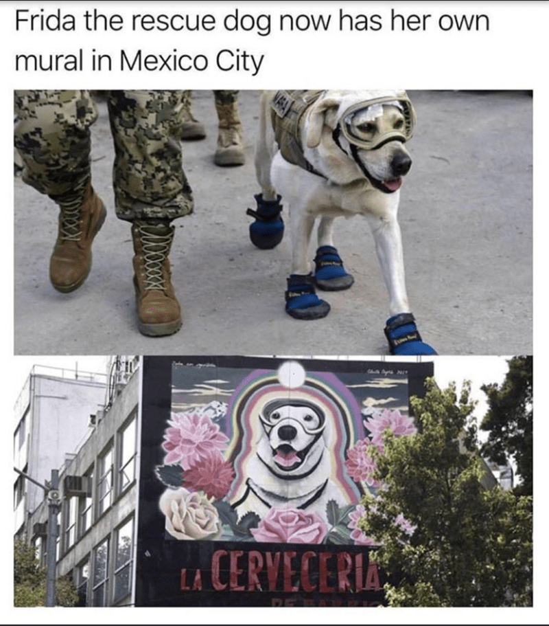 wholesome meme of a rescue dog that has her own mural in mexico city