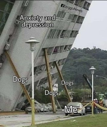 wholesome meme about dogs helping people get through anxiety and depression