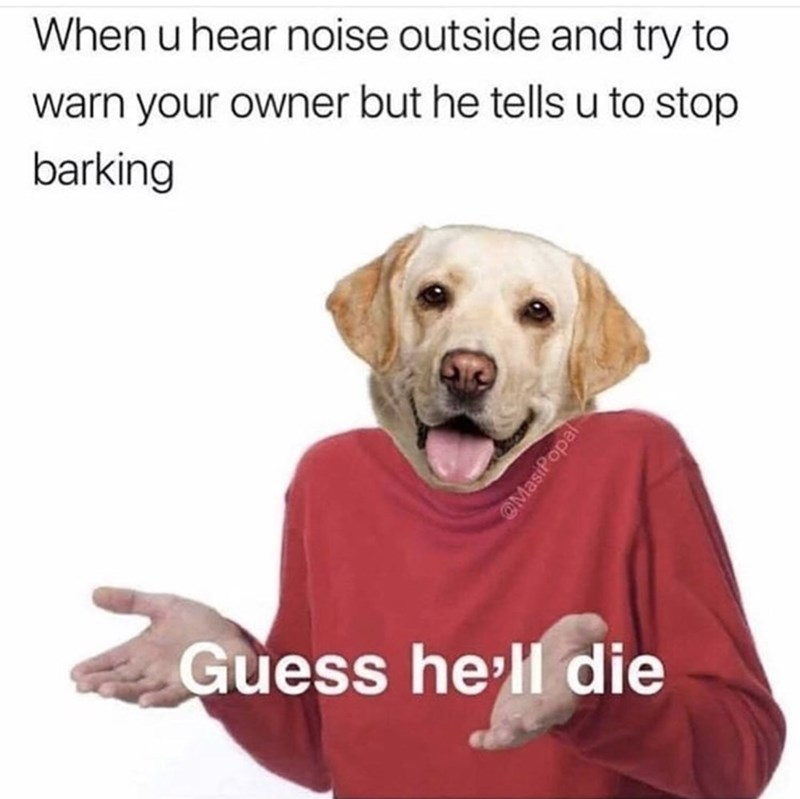 Canidae - When u hear noise outside and try to warn your owner but he tells u to stop barking Guess hell die @MasiPopal