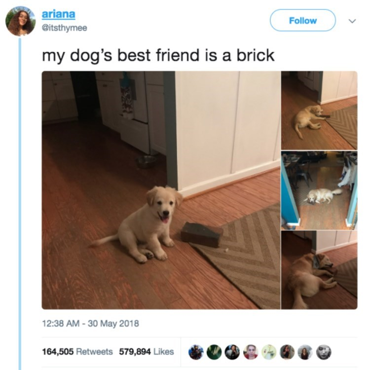 "Tweet that reads, ""My dog's favorite best friend is a brick"" above a pic of a little puppy with a brick and the same dog with a brick"