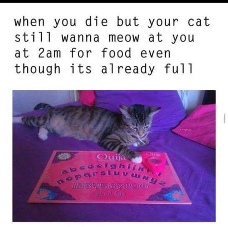 "Caption that reads, ""When you die but your cat still wanna meow at you at 2am for food even though it's already full"" above a pic of a cat with a Ouija board"