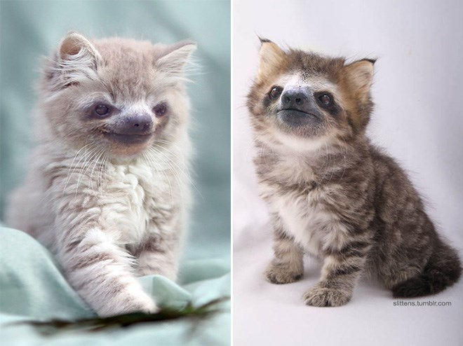 two cats with sloth faces sitting down