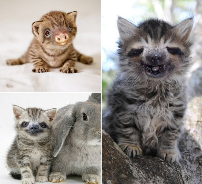 three tabby and orange cats with sloth faces