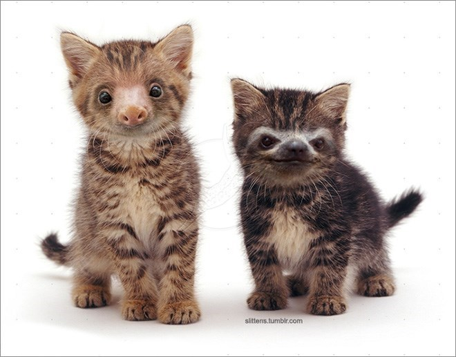 two tabby cats with sloth faces standing