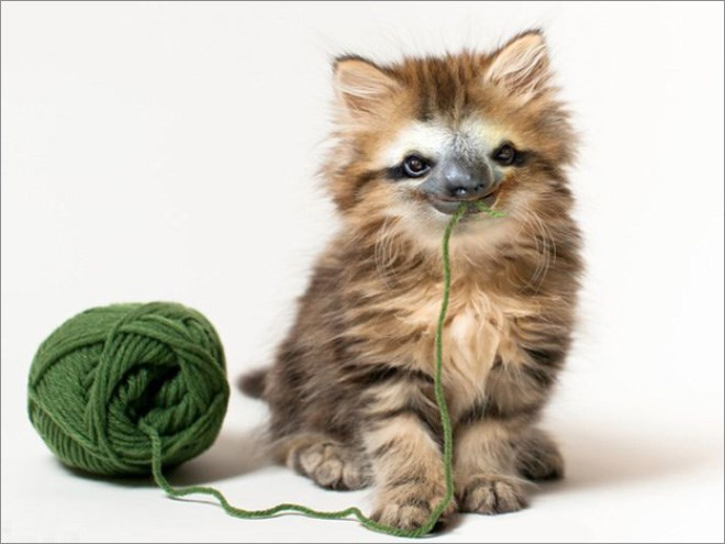 tabby cat with sloth face holding green yarn in mouth next to yarn ball