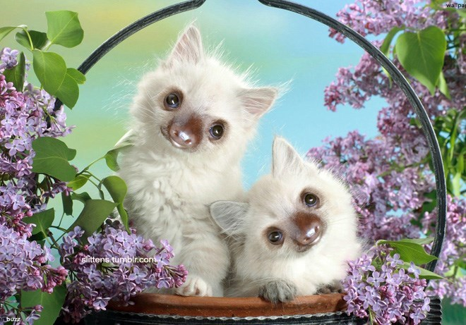 two white cats with sloth faces inside a basket with purple flowers