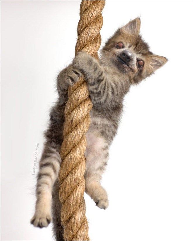 cat with sloth face climbing a rope