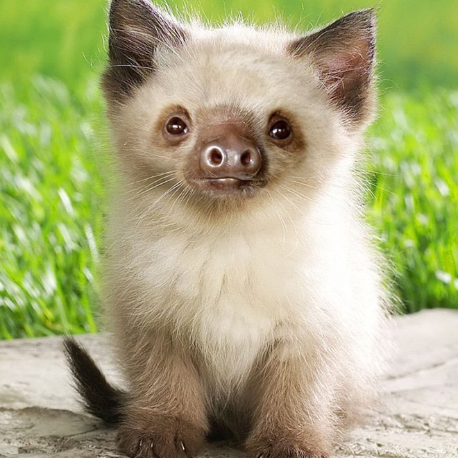 white cat with sloth face in front of grass
