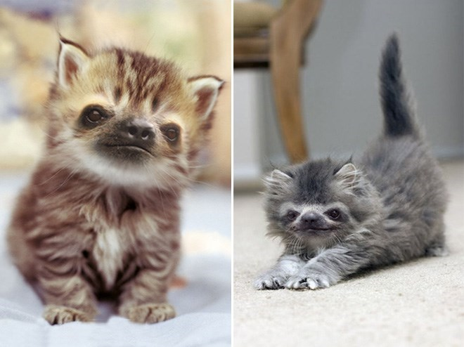 brown and grey cats with sloth faces