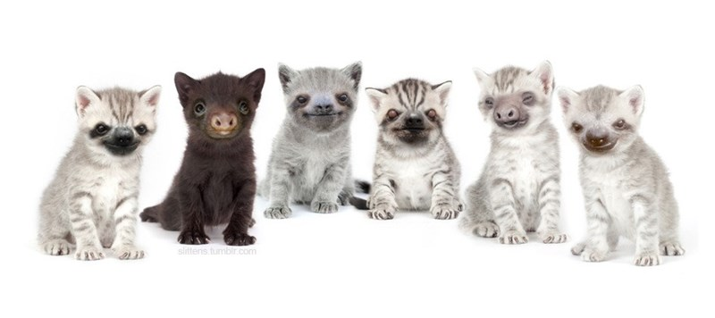 group of white and grey cats with sloth faces sitting together