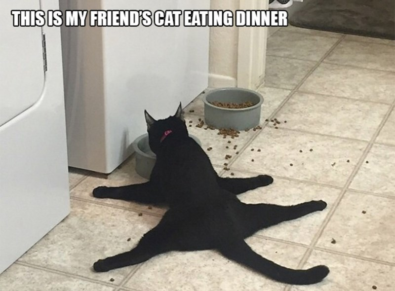 """Caption that reads, """"This is my friend's cat eating dinner"""" above a pic of a cat completely spread out on the floor eating"""