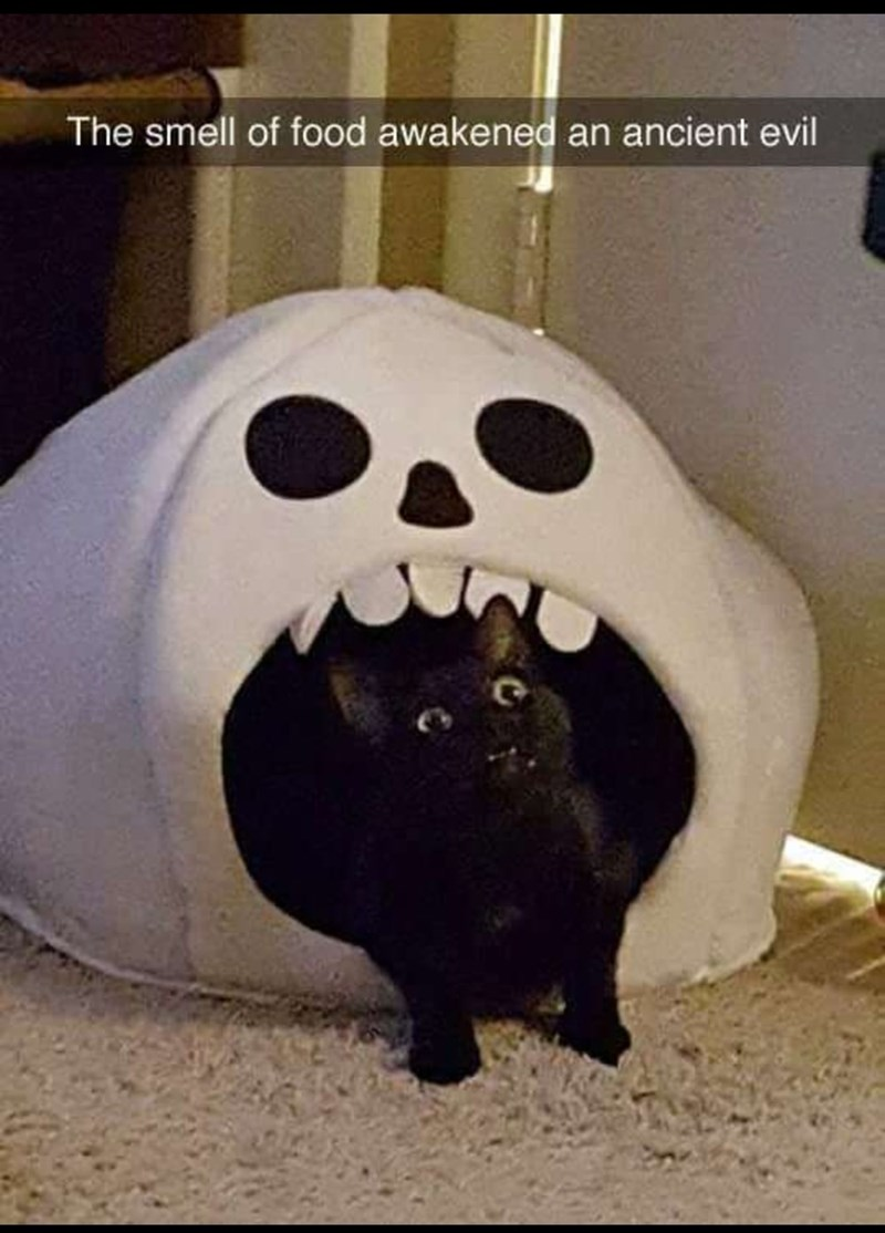 """Caption that reads, """"The smell of food awakened an ancient evil"""" above a pic of a black cat coming out of its skeleton house"""