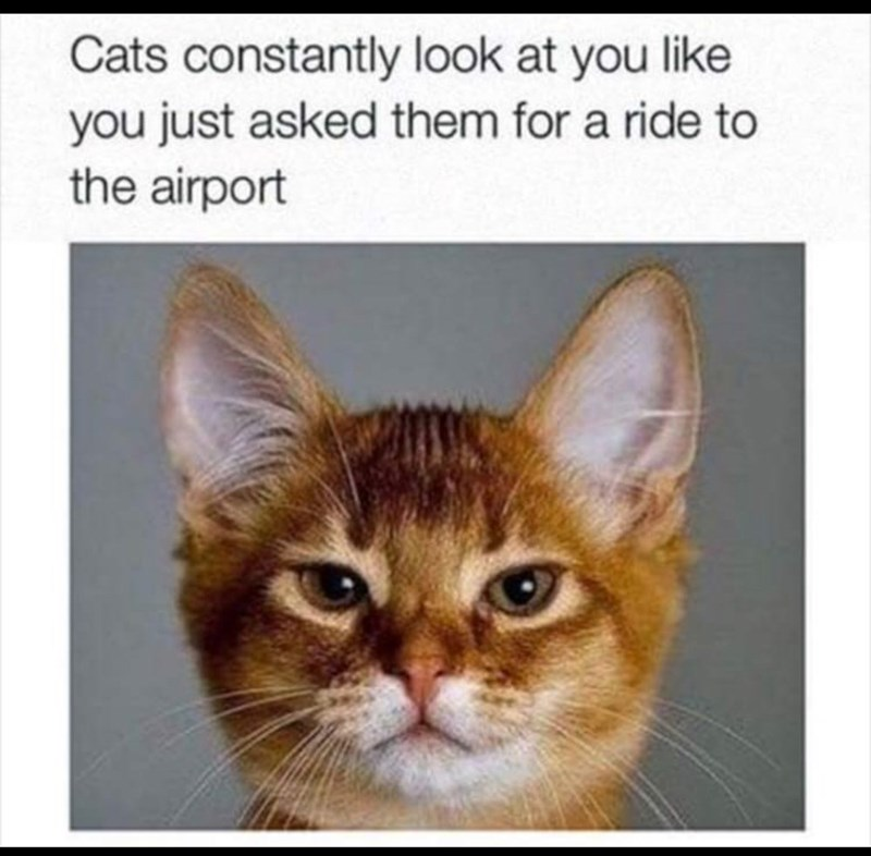 """Caption that reads, """"Cats constantly look at you like you just asked them for a ride to the airport"""" above a pic of an orange cat looking disgruntled"""