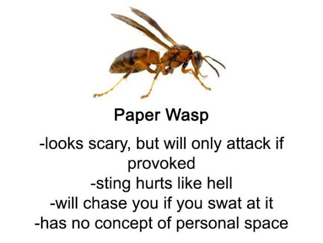 Insect - Paper Wasp -looks scary, but will only attack if provoked -sting hurts like hell -will chase you if you swat at it -has no concept of personal space