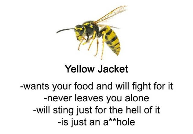 Honeybee - Yellow Jacket -wants your food and will fight for it -never leaves you alone -will sting just for the hell of it -is just an a**hole