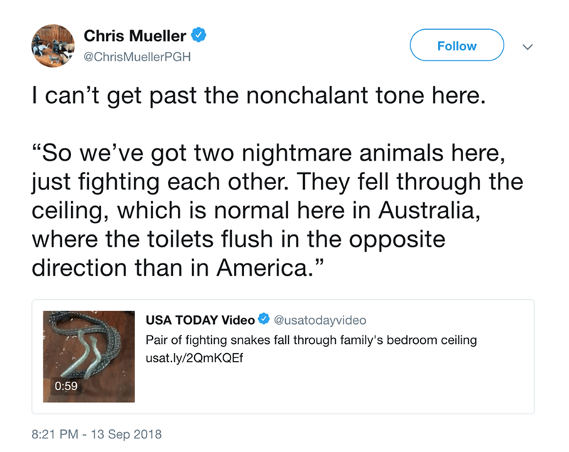 """Text - Chris Mueller Follow @ChrisMuellerPGH I can't get past the nonchalant tone here. """"So we've got two nightmare animals here, just fighting each other. They fell through the ceiling, which is normal here in Australia, where the toilets flush in the opposite direction than in America."""" USA TODAY Video @usatodayvideo Pair of fighting snakes fall through family's bedroom ceiling usat.ly/2QmKQEf 0:59 8:21 PM-13 Sep 2018"""