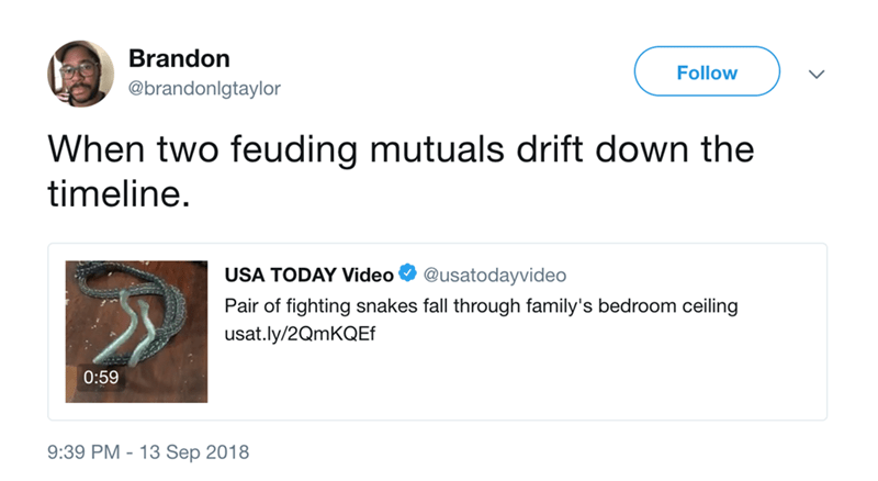 Text - Brandon Follow @brandonlgtaylor When two feuding mutuals drift down the timeline USA TODAY Video @usatodayvideo Pair of fighting snakes fall through family's bedroom ceiling usat.ly/2QmKQEf 0:59 9:39 PM 13 Sep 2018