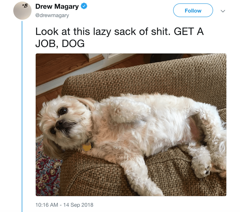 Dog - Drew Magary B Follow @drewmagary Look at this lazy sack of shit. GET A JOB, DOG 10:16 AM 14 Sep 2018