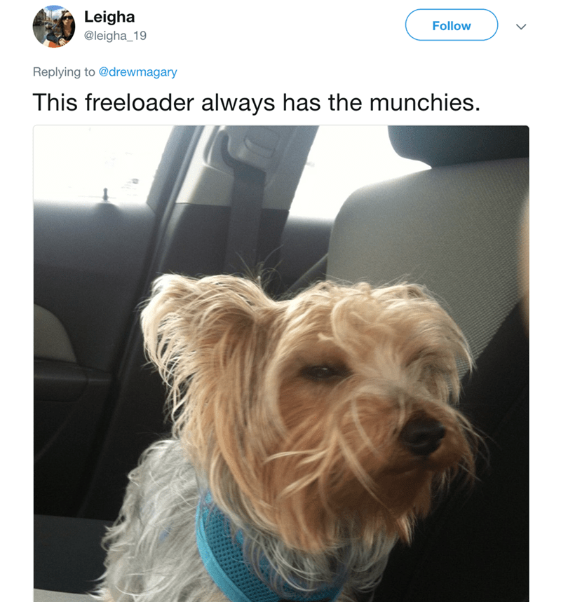 Dog - Leigha Follow @leigha_19 Replying to @drewmagary This freeloader always has the munchies.