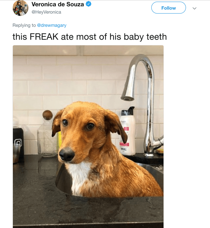 Dog - Veronica de Souza Follow @HeyVeronica Replying to @drewmagary this FREAK ate most of his baby teeth NAHC
