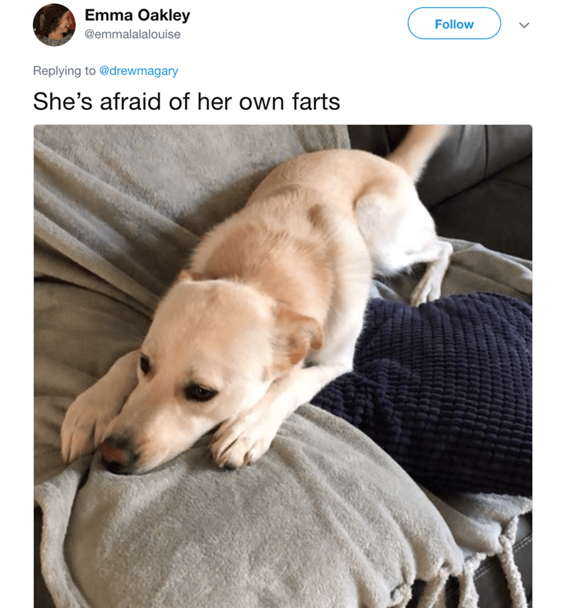 Dog - Emma Oakley Follow @emmalalalouise Replying to @drewmagary She's afraid of her own farts