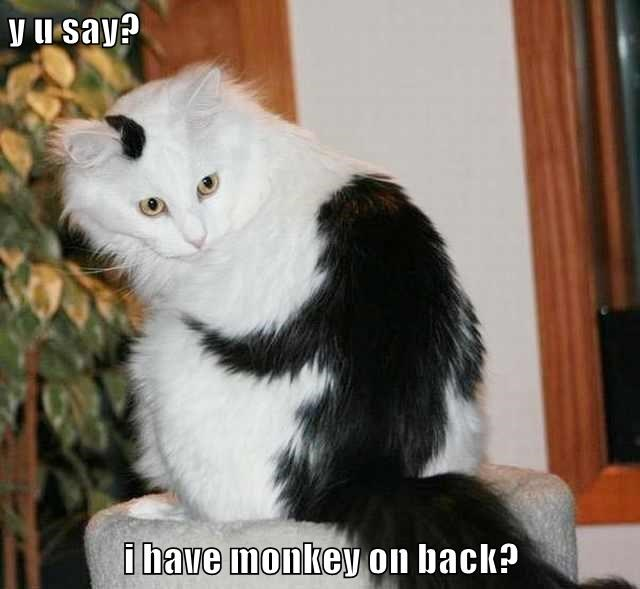 Cheezburger Image 9214893824