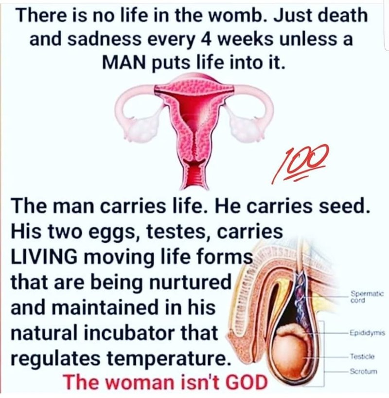 Text - There is no life in the womb. Just death and sadness every 4 weeks unless a MAN puts life into it The man carries life. He carries seed His two eggs, testes, carries LIVING moving life forms that are being nurtured and maintained in his Spermatic cord natural incubator that Epididymis regulates temperature. The woman isn't GOD Testicle Scrotum