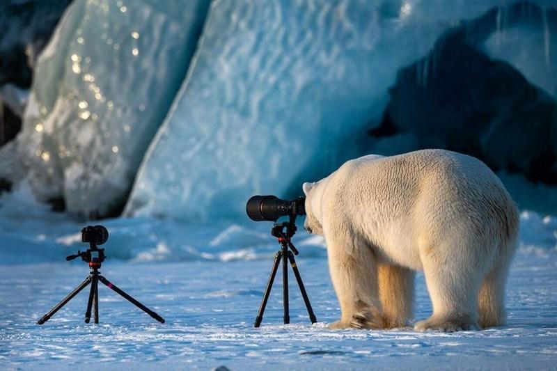 funny animal - Polar bear