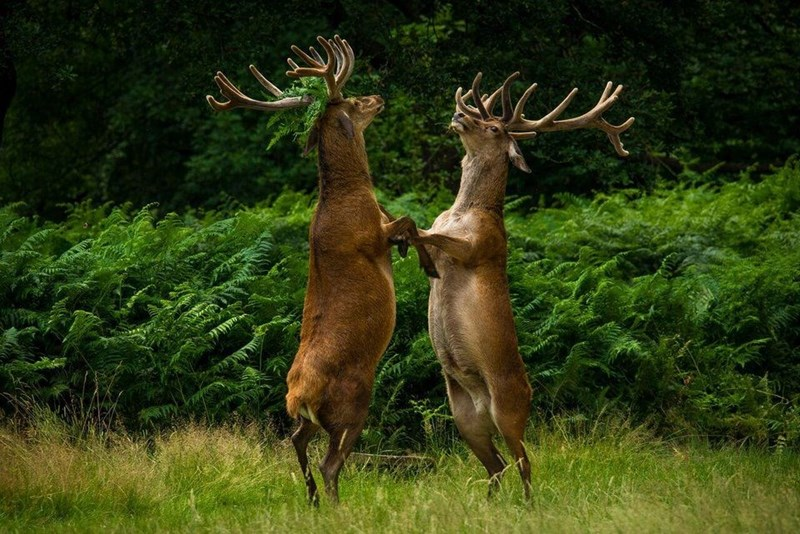 funny animal - Deer