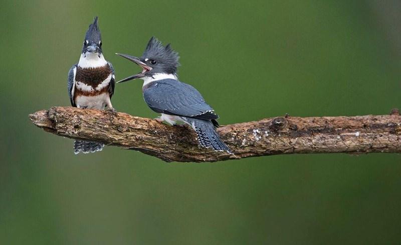 funny animal - Bird