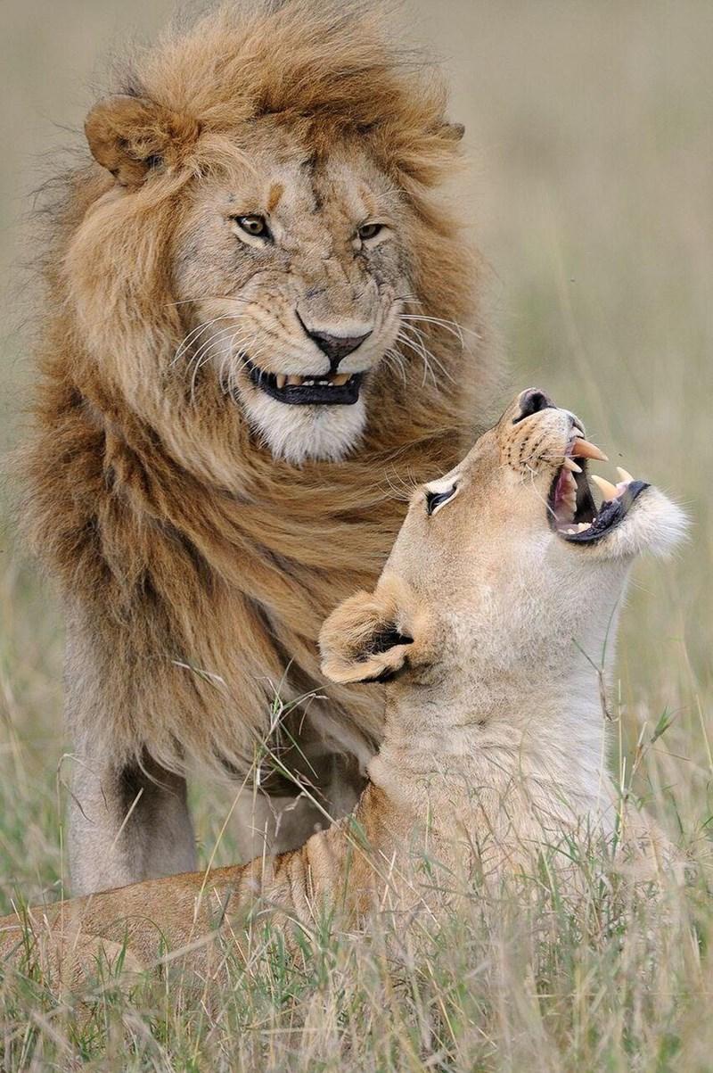 funny animal - Mammal