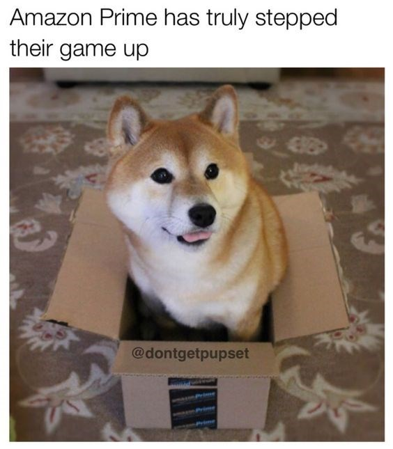 shiba inu - Dog - Amazon Prime has truly stepped their game up @dontgetpupset