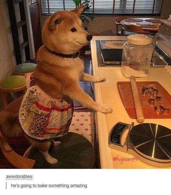shiba inu - Canidae - efujisan awwdorables: he's going to bake something amazing