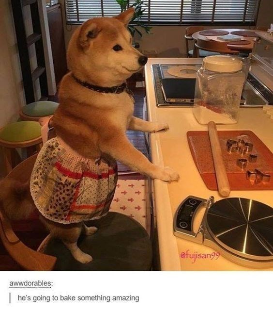 shiba inu - Canidae - efujisan awwdorables: he's going to bake something amazing