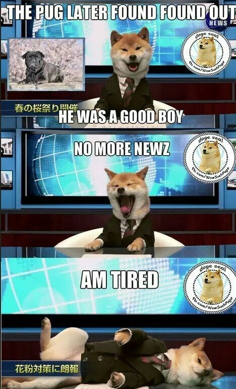 shiba inu - Canidae - THE PUG LATER FOUND FOUND OUT NEWS doge seal fb.cen/Wew SuchPge 祭り問催 WASAGOODBOY 0ge sea NO MORE NEWZ tbcom/Wow SuchPage d0ge sea AM TIRED fb.com/WowSuchPo 花粉対策に朗報