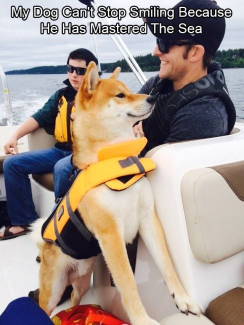 shiba inu - Dog - My Dog Can't Stop Smiling Because He Has Mastered The Sea