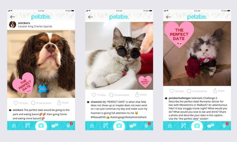 """Cat - 941 AM petzbe. 941 AM 100% petzbe. 9:41 AM snickers petzbe. Cavalier King Charles Spaniel THE PERFECT DATE PERFECT DATE THE THE PERFECT DATE 17 licks 9.comments 32 licks 4 comments rh share h share 37 licks 9 comments rh share chamimi My""""PERFECT DATE"""" is when that fella does not show up or maybe does not even exist so I can just continue my day and make sure my petzbechallenges Valentails Challenge 2: Describe the perfect date! Romantic dinner for two with Meowtinins or Malbark? An adventu"""