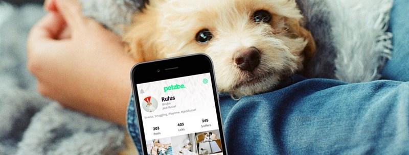 Dog - petzbe Rufus @rufus jack Rusel Snacks Snuggling Playtime, #jackRussel 345 403 203 Sniffers Licks Posts