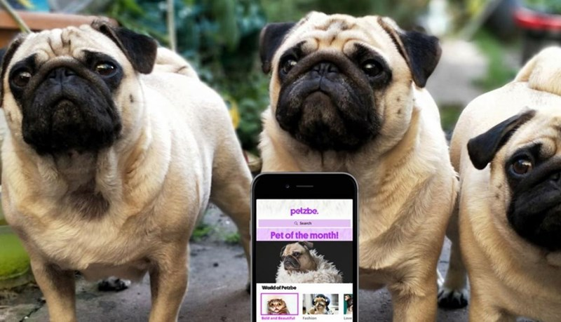 Dog - petzbe. Search Pet of the month! World of Petzbe Bold and Beautifu Fashion Loven