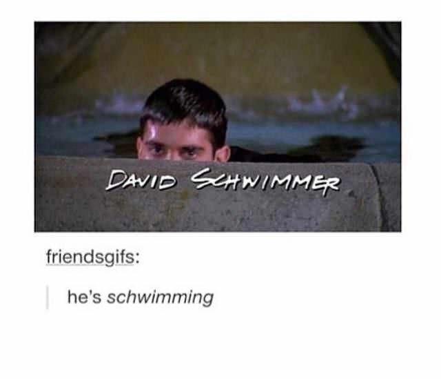 Text - DAVID SHWIMMER friendsgifs: he's schwimming