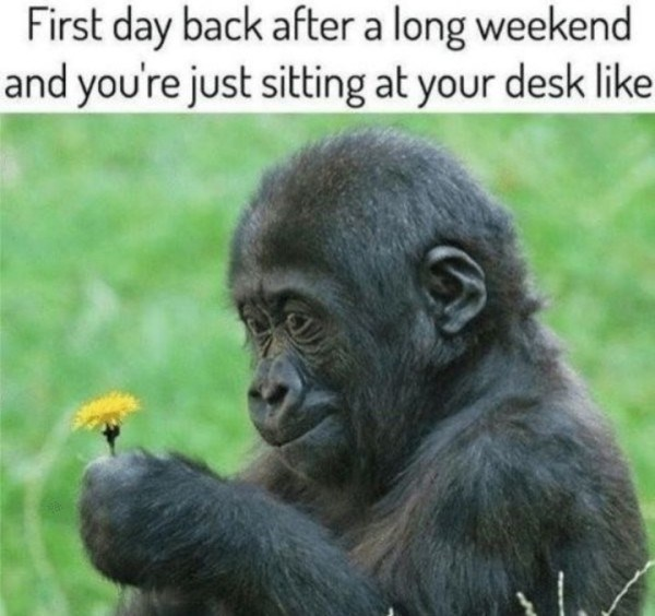 work meme about coming back from vacation with pic of gorilla looking at a flower