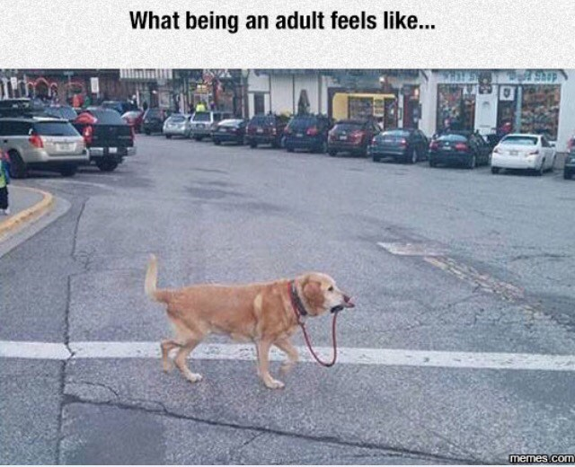 Dog - What being an adult feels like... memes.com