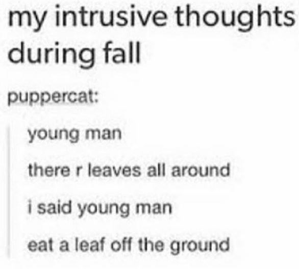 Text - my intrusive thoughts during fall puppercat: young man there r leaves all around i said young man eat a leaf off the ground