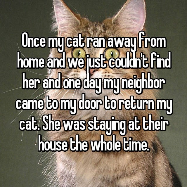 Photo caption - Once my cab ranaway hrom home and we justcouldht find her and one daymy neighbor came tomy door toreturn my cat. She was staying at their house the whole time